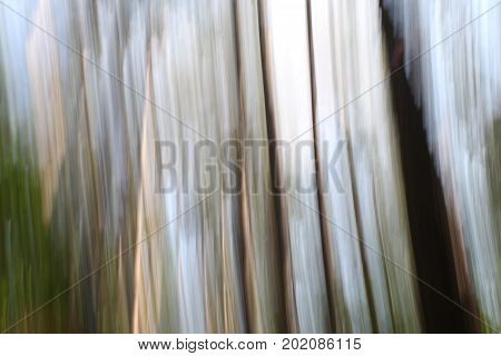 Abstract background image of photography technique known as panning, done with trees in the woods.
