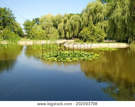 Park with a lake with water lilies. Romania