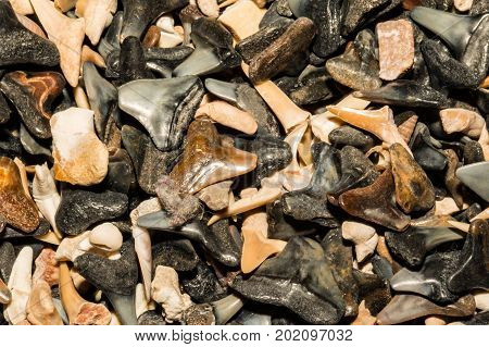 Shark tooth background in a shop in Cape Cod Massachusetts.
