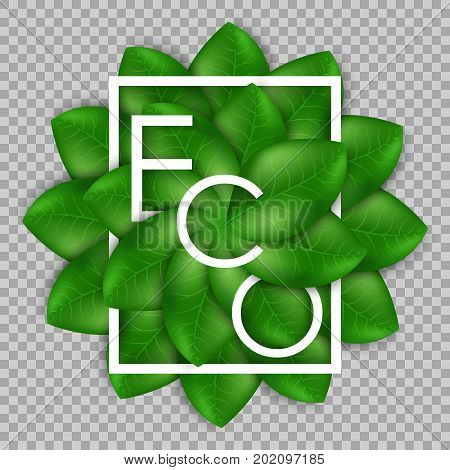 Eco the inscription of the leaves isolated on transparent background. Leaves design elements. Eco style. Green sprout green leaves symbol. Ecological theme. Greenery. Vector Illustration.