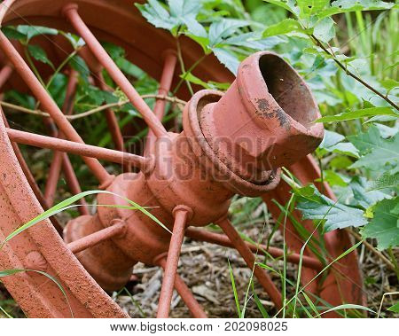 Old orange farm machinery iron wheel in the foliage