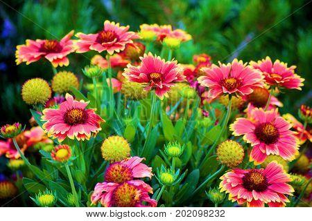 Cluster of flowers taken in a residential garden