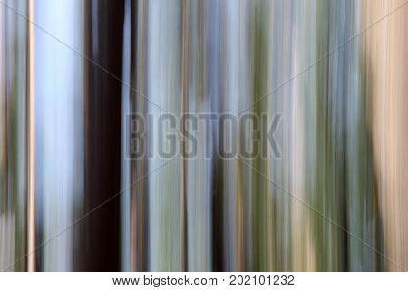 Horizontal image of photography technique known as 'panning,' with focus of trees creating an interesting abstract background.