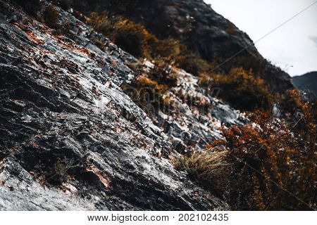View of rocky flank of hill with multiple partly dry bushes on it on overcast autumn day Altai mountains Russia