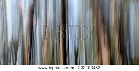 Horizontal image of a photography technique known as 'panning' using the trees in the woods for subject makes an interesting abstract background.