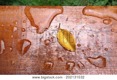 Piece of weather proof stained wood on an outdoor deck showing beaded water with small leaf