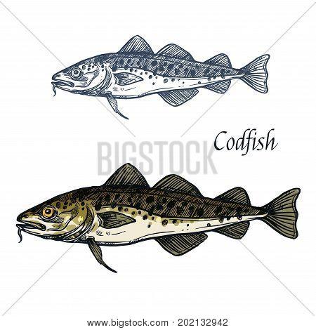 Cod fish vector sketch icon. Isolated sea or ocean codfish pollock or haddock species of marine fauna animal symbol for zoology, seafood or fish food restaurant, fishing club or fishery market