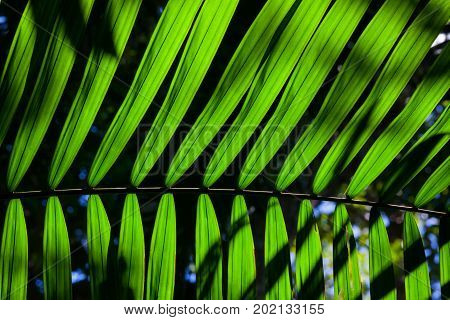 Big green backlit leaf in the jungle