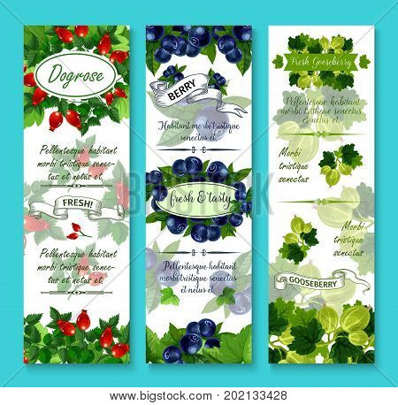 Berries banners for berry shop or farmer market. Vector set of dogrose berry, gooseberry or strawberry and cranberry harvest, juicy black or red currant and garden raspberry, blueberry or blackberry