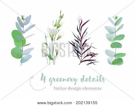Mix of herbs and plants vector big collection. Cute rustic wedding greenery. Eucalyptus, white lisianthus flowers, agonis foliage with leaves and stems. Watercolor style set. All elements are isolated