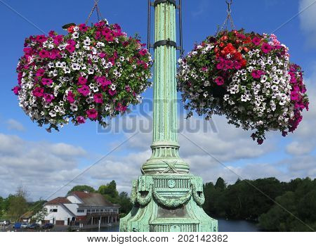 Colorful petunias in Large hanging baskets on lamp post on bridge over river Thames Reading England
