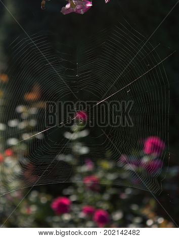 Focused on spider web. In the background is a flowerbed.