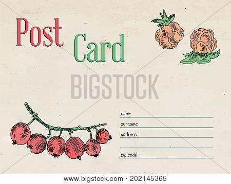berries garden postcard envelope template design and illustration red currant berry and cloudberry