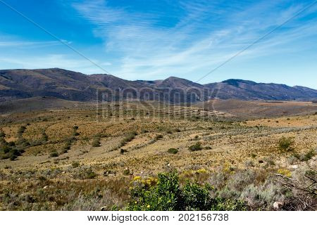 Flowers And Bushy Landscape With Mountains