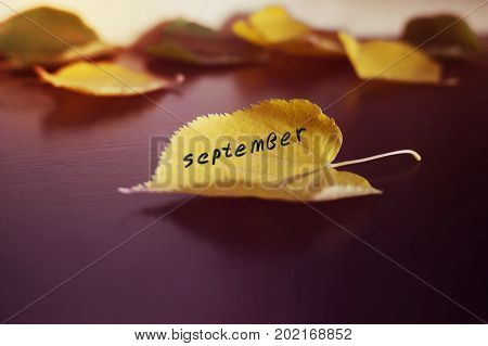 Fallen Leaves Scattered On A Wooden Lacquered Board. The Concept Of Autumn