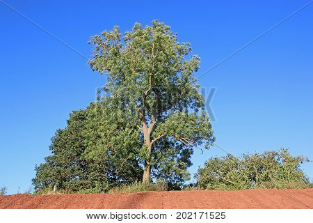 tree standing on top of an earth bank