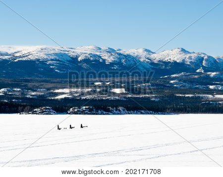 Sled Dog Musher On Lake Laberge Yt Canada