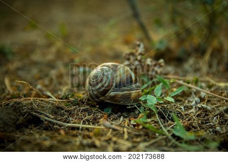 A close up of the snail on grass. Macro shot