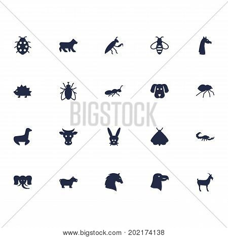 Collection Of Hippo, Housefly, Steed And Other Elements.  Set Of 20 Alive Icons Set.