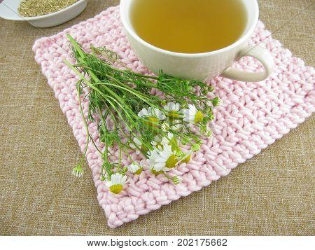 Fresh camomile and camomile tea in a tea cup