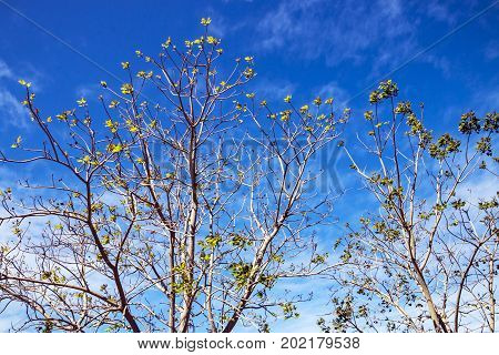 Dry Leafless Tree Branches Against Blue Cloudy Sky