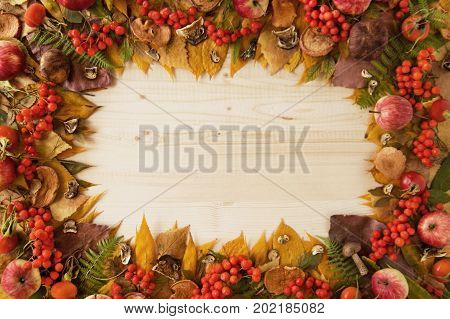 Frame From Dry Colorful Autumn Leaves, Dry And Fresh Mushrooms, Fresh Rose Hips And Rowanberry, Fres