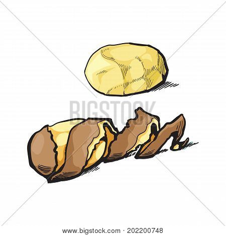 vector sketch cartoon ripe raw peeled yellow potato with spiral twisted peel. Isolated illustration on a white background. Vegetable fresh natural product, healthy lifestyle, eating concept