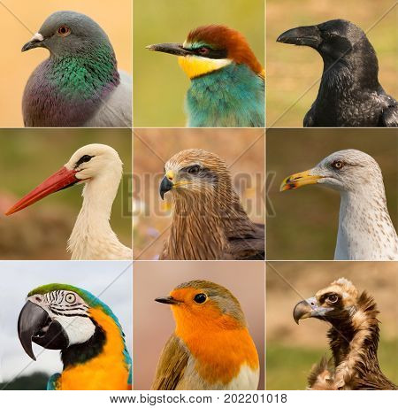 Portraits of different birds in freedom