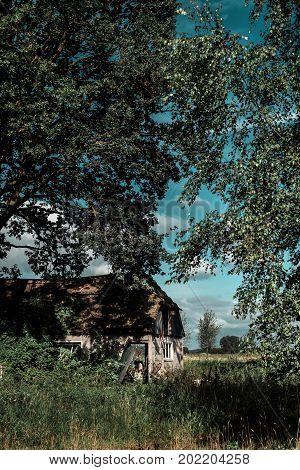 Neglected farmhouse in a wild summer garden.