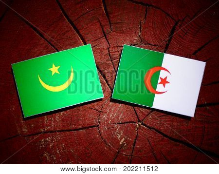 Mauritania Flag With Algerian Flag On A Tree Stump Isolated