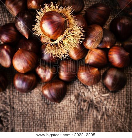 Ripe chestnuts on old wooden table and sack napkin close up with copy space. Raw Chestnuts for Christmas