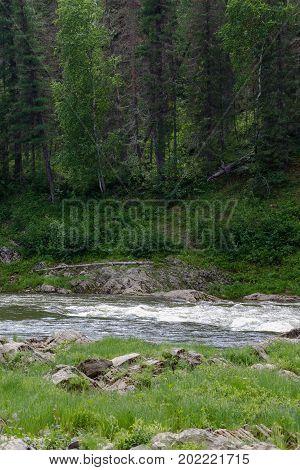 Siberian river. Small tributary of the Yenisei River. Krasnoyarsk region, Russia