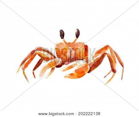 Watercolor illustration hand drawn orange crab isolated object on white background.