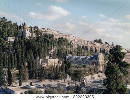The Olive Grove of Gethsemane in Jerusalem
