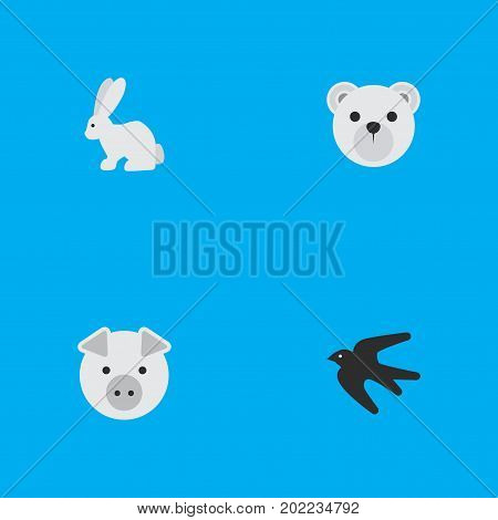 Elements Panda , Piggy , Sparrow Synonyms Swine, Panda And Pig.  Vector Illustration Set Of Simple Animals Icons.