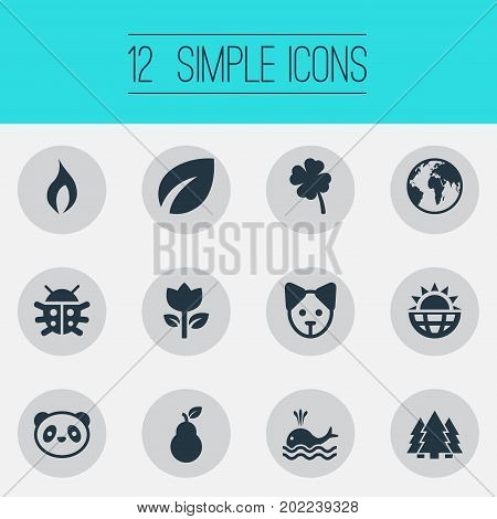 Elements Ignite, Jungle, Insects And Other Synonyms Garden, Woods And Leaf.  Vector Illustration Set Of Simple Nature Icons.