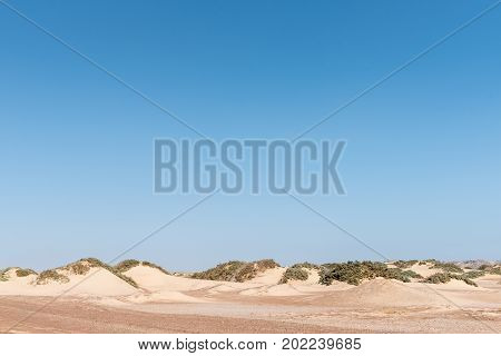 Typical Namib desert coastal dunes in the Skeleton Coast area of Namibia with sand accumulating against vegetation forming small dunes