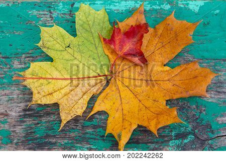 Multicolored leaves on a wooden surface stylized under the dial. Autumn background