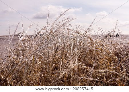 Grass glazed by late winter ice storm sparkles in the sunlight of an Oklahoma morning.