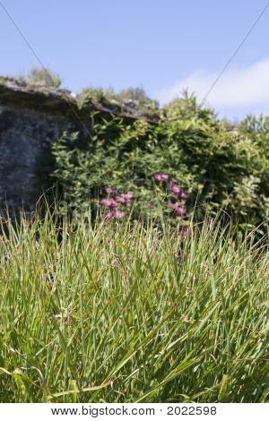 Grasses, Wildflowers, Wall, Ireland