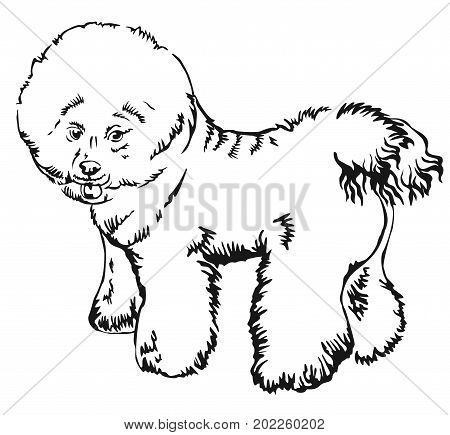 Decorative portrait of standing in profile Bichon Frise vector isolated illustration in black color on white background