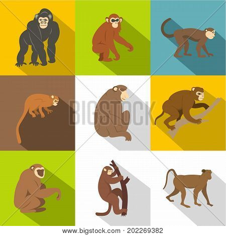 Jungle monkey icon set. Flat style set of 9 jungle monkey vector icons for web design