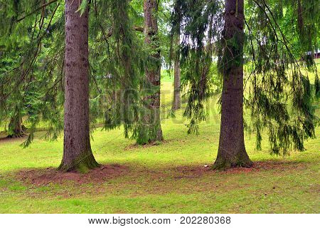 Landscape in Pusupuisto Park of Lappeenranta Finland. Lappeenranta - city and municipality in Finland in the province of Eastern Finland.