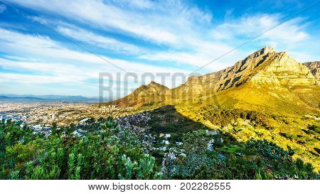 View of Table Mountain, Cape Town and Devils Peak from the hiking trail to the top of Lions Head mountain near Cape Town South Africa on a nice winter day
