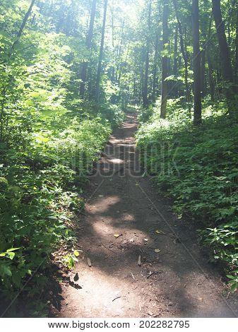 Trail In Deciduous Forest. Summer Walk. Wildlife.