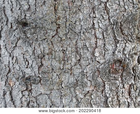 The texture of the bark of the larch. Bark in a vertical position. Perennial tall tree from Siberia. For texturing 3d models and illustrations.