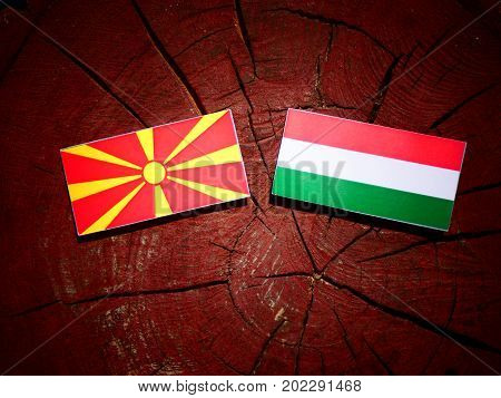 Macedonian Flag With Hungarian Flag On A Tree Stump Isolated