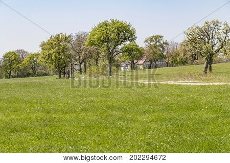 idyllic rural scenery showing a farmstead behind some trees at spring time in Southern Germany