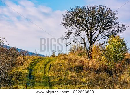 Lonely Tree By The Road In Autumn Morning