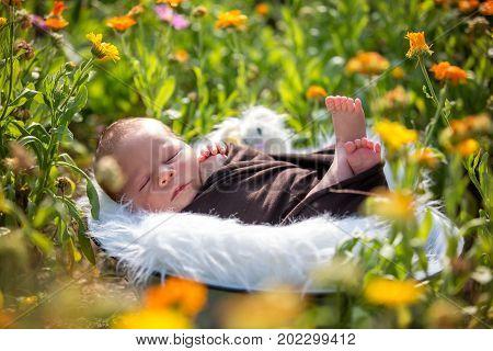 Cute Newborn Baby Boy, Sleeping Peacefully In Basket In Garden